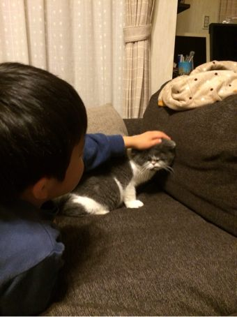 うちの猫と息子