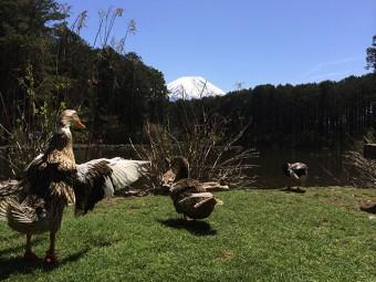 富士花鳥園-池