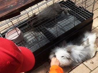 富士花鳥園-ウサギ