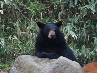 富士サファリパーク-熊